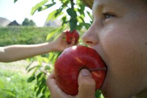 Obstpflücktage